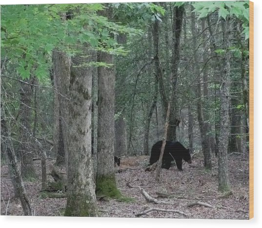 Mother Bear And Cub In Woods Wood Print by Kathy Long