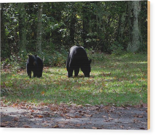Mother Bear And Cub Wood Print by Kathy Long