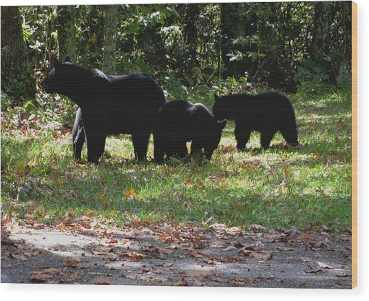 Mother Bear And Three Cubs Wood Print by Kathy Long