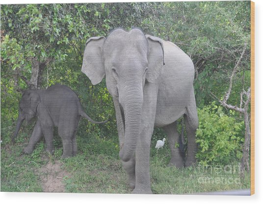 Mother Elephant And Baby Wood Print