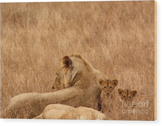 Mother Lion With Family Wood Print
