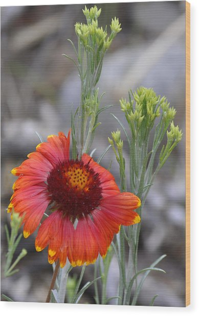Mount Charleston Wildflowers Wood Print by Sandra Welpman