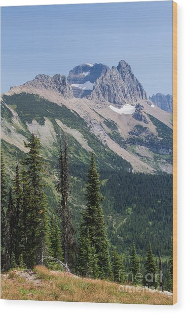 Wood Print featuring the photograph Mount Gould And Subalpine Fir by Katie LaSalle-Lowery