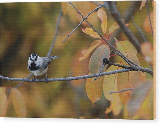Mountain Chickadee 1 Wood Print