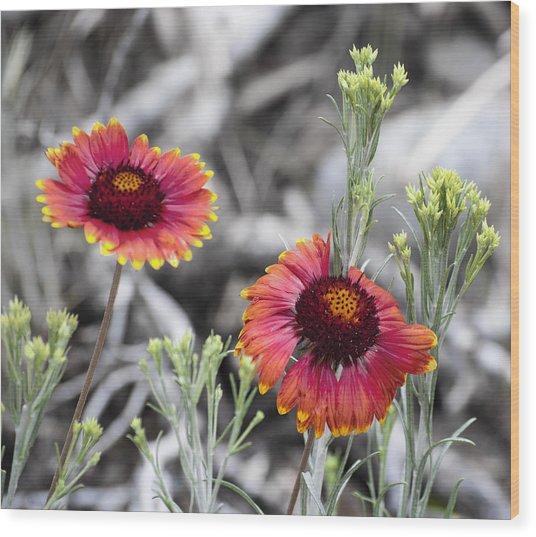 Mountain Flower 2 Wood Print by Sandra Welpman