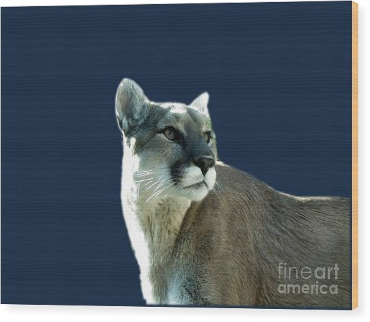 Mountain Lion Beauty Wood Print by Donna Parlow