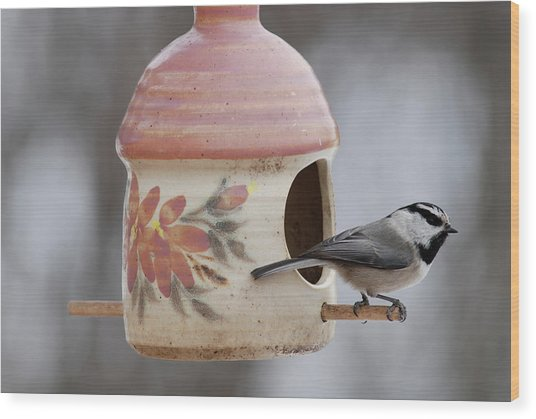 Mountian Chickadee At Feeder Wood Print