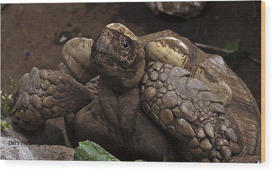 Mr. Tortoise Wood Print by Dorothy Hilde