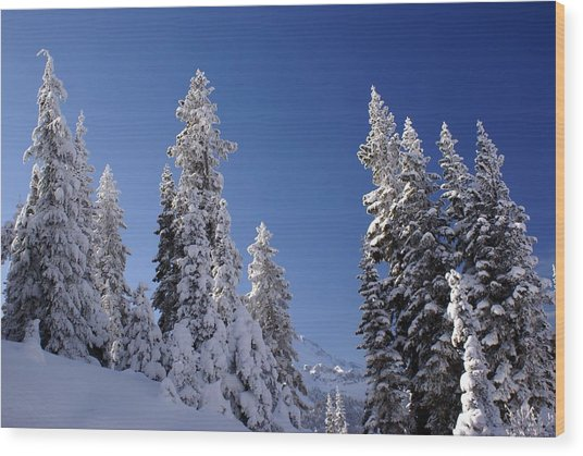 Mt. Rainier's Christmas Tree's Wood Print