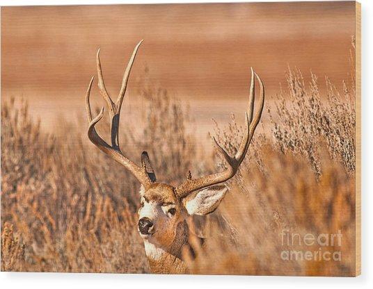 Mule Deer Buck Closeup Wood Print by Earl Nelson