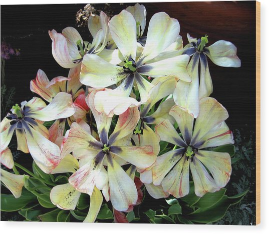 Multicolored Beauties Wood Print by Ed Golden