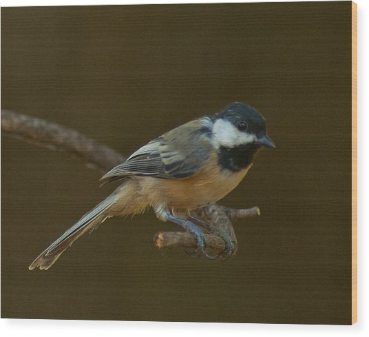 Multicolored Chickadee Wood Print by Don Wolf