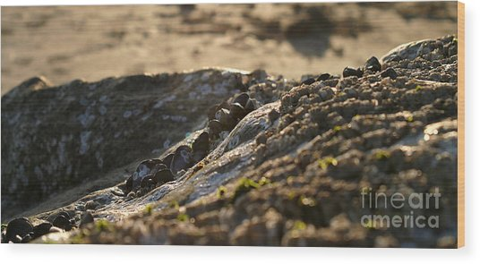 Mussels Sunset Wood Print