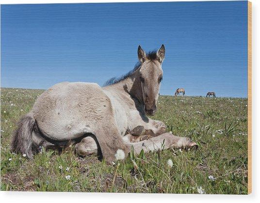 Mustang Foal Up Close Wood Print