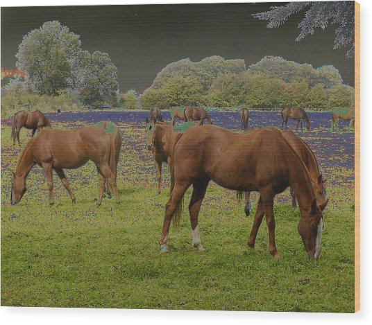 Mystical Horses Wood Print by Fred Whalley