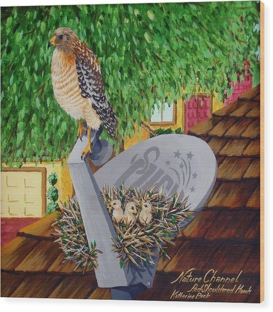 Nature Channel- Red Shouldered Hawk Wood Print