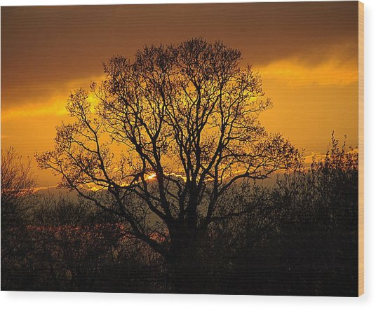 Nature's Gold Wood Print by Cat Shatwell