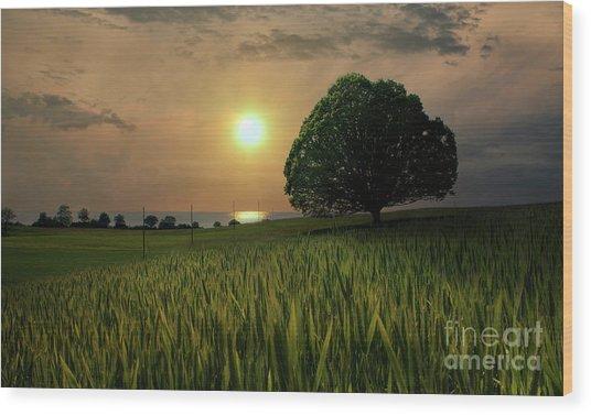 Near Paradise  Wood Print