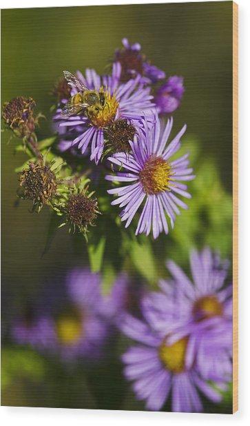 Nectar Gathering Wood Print