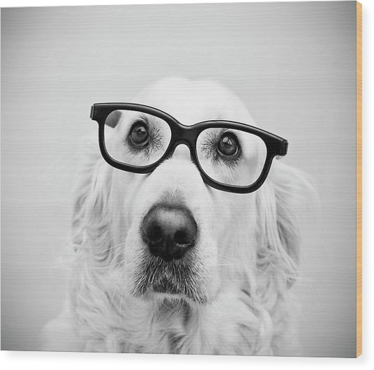 Nerd Dog Wood Print by Thomas Hole
