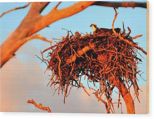 Nest Wood Print by Barry R Jones Jr