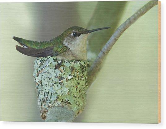 Nesting Ruby-throated Wood Print