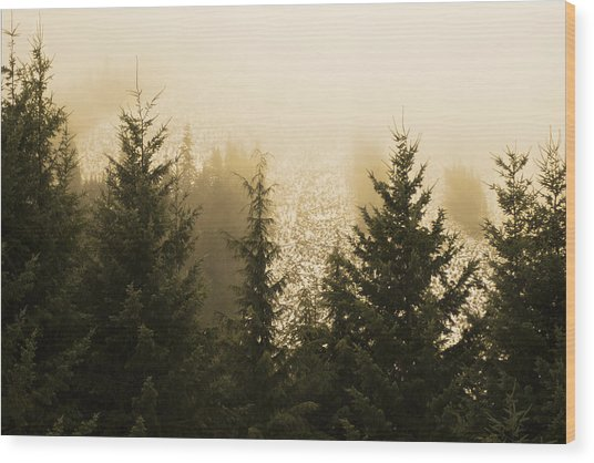 New Dawn Wood Print by Terrie Taylor