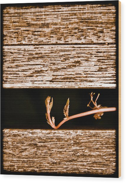 Albuquerque, New Mexico - New Growth Wood Print