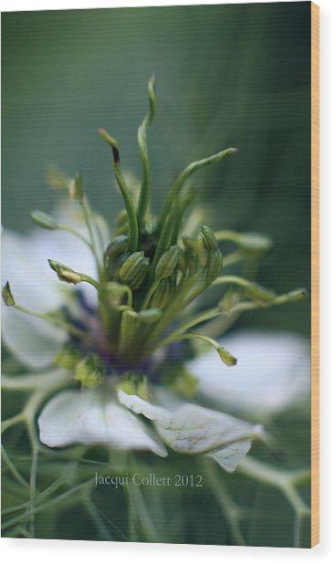 Nigella Wood Print