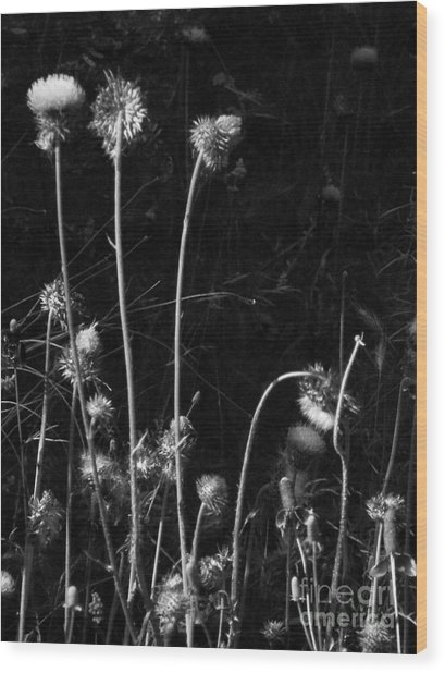 Night Dance Wood Print by Joe Jake Pratt
