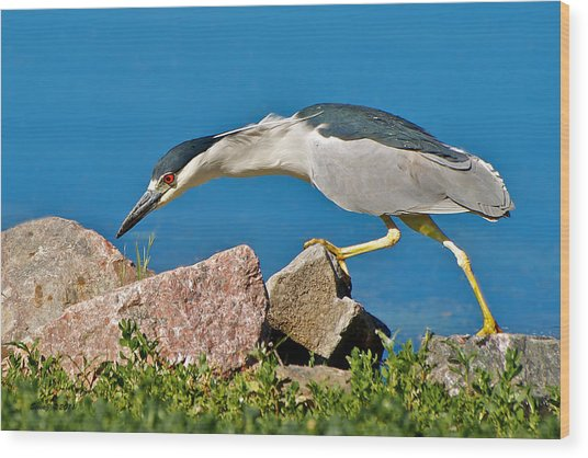 Night Heron At Ketring Lake Wood Print