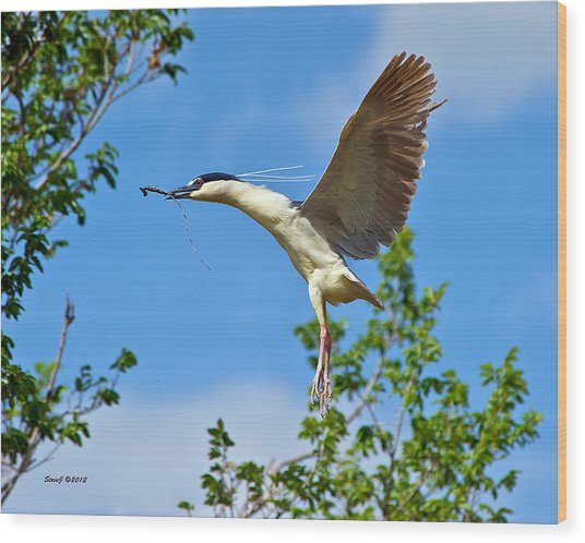 Night Heron Building Nest Wood Print