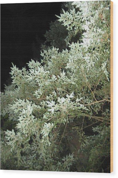 Night Trees Wood Print by Lali Partsvania