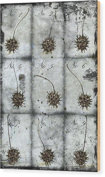 Nine Seed Pods Wood Print