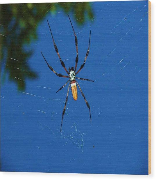 Not-so Itsy-bitsy Spider Wood Print