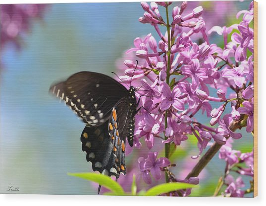 Nothing Says Spring Like Butterflies And Lilacs Wood Print