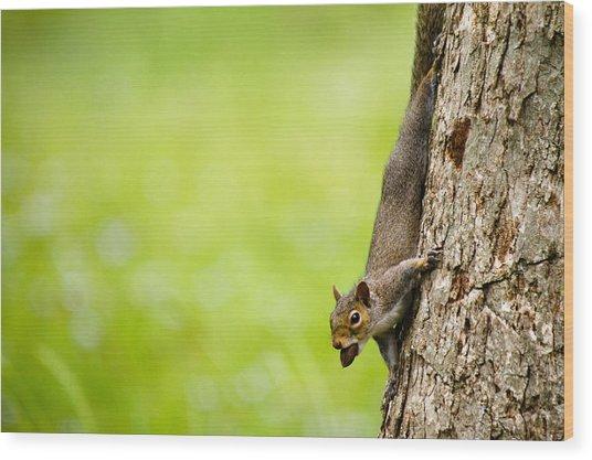 Nut Job Wood Print