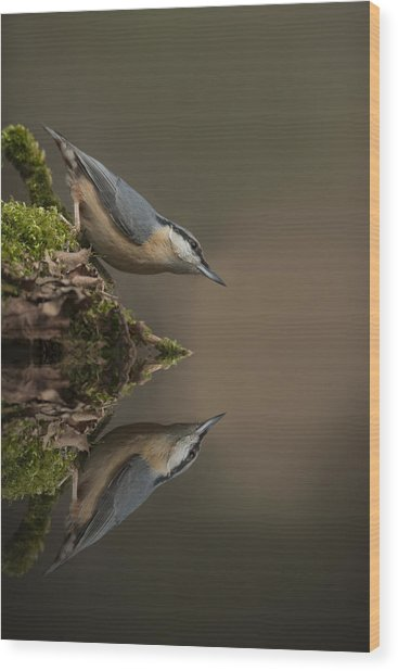 Nuthatch Reflection Wood Print