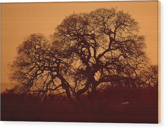 Oak Tree At Sunset Wood Print