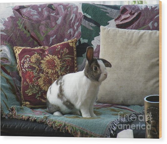 Obelix The Rabbit  Wood Print