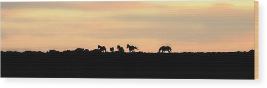 Off Into The Sunset Wood Print by Donna Duckworth