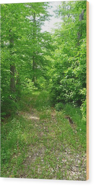 Off The Beaten Path Wood Print by Michael Carrothers
