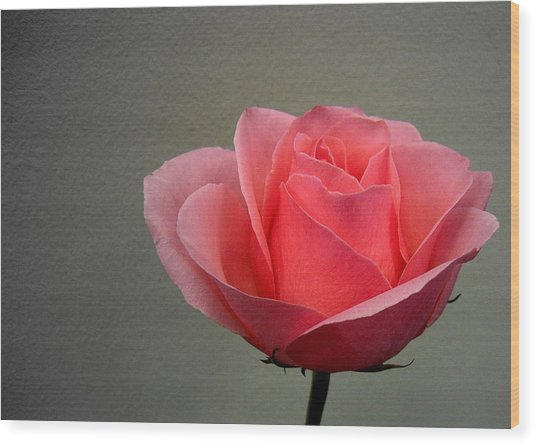 Office Rose Wood Print by Al Cash