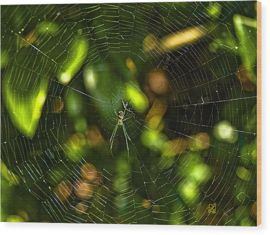 Oh The Web We Weave Wood Print