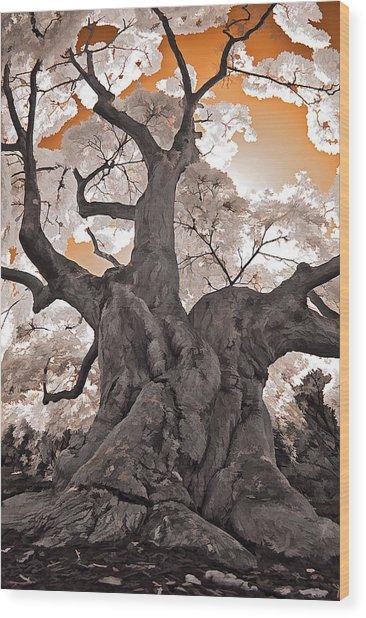 Old Japanese Maple Wood Print