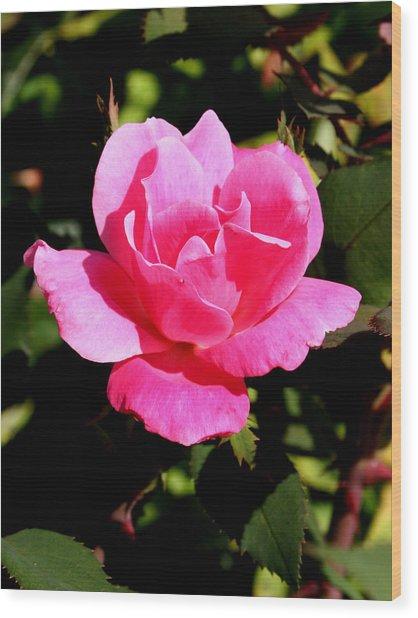 Old Towne Rose2 Wood Print
