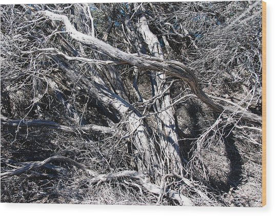 Old Wind Swept Tree Wood Print