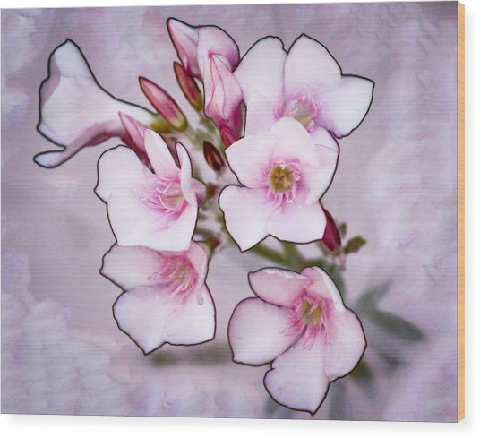 Oleander Blossoms Wood Print by Jim Painter