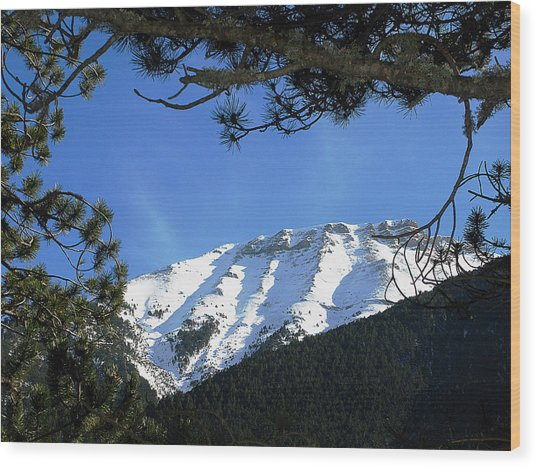 Olympos Through Firs Wood Print by Andonis Katanos