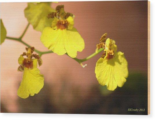 Oncidium Goldiana Orchid Wood Print